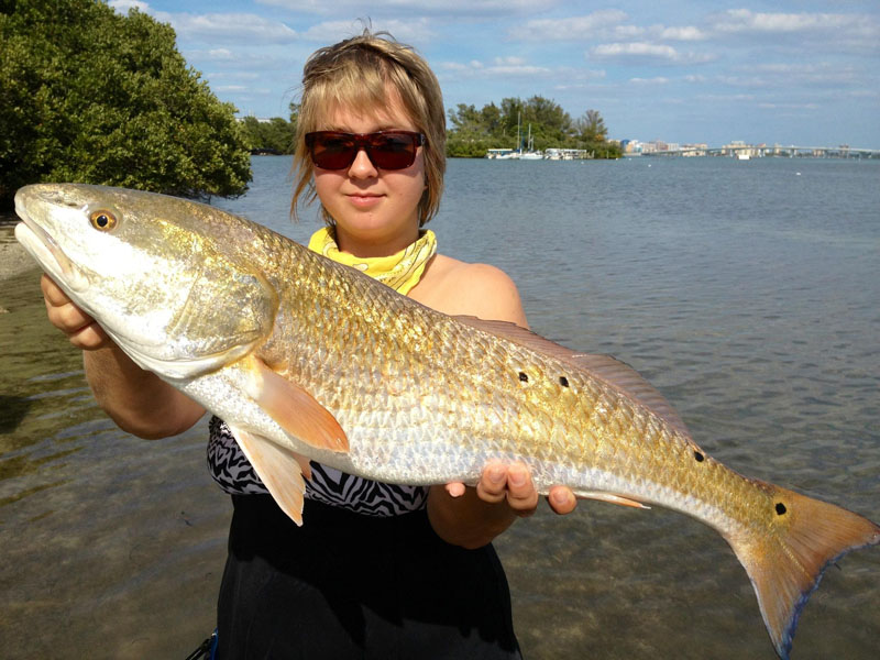 Catch the big fish in sarasota by starting at all about for All about fish