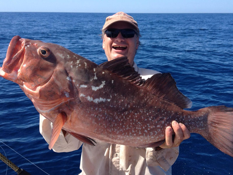 catch the big fish in sarasota by starting at all about
