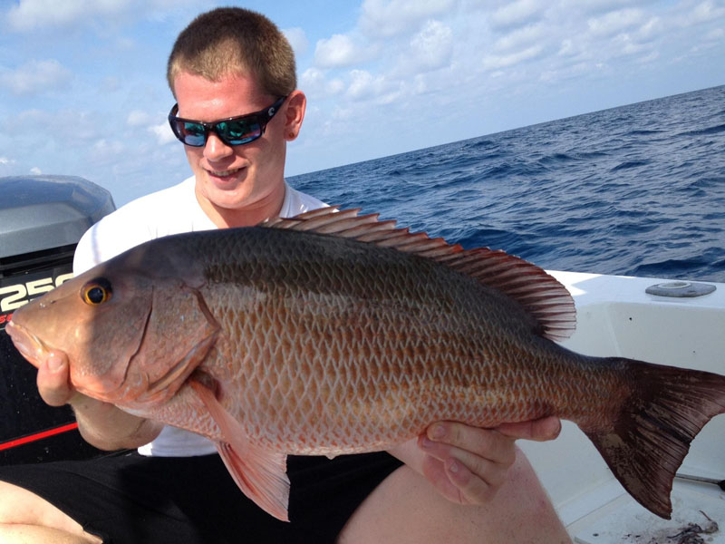 Best fishing in sarasota starts at all about fishing the for Best bait to catch fish