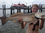 Catch the Big Fish in Florida by Starting at All About Fishing for Fresh Bait and Fishing Tips in Sarasota, FL